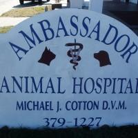 ambassadoranimalhospitalrepair